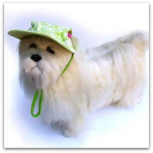 dog cool hats