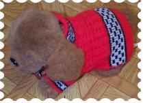 doggie coats