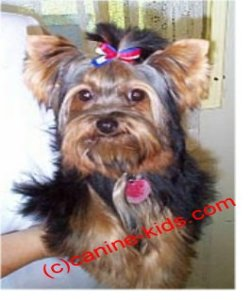 dog hair accessories