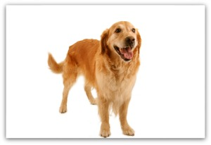 dog health blood in stool