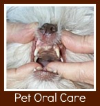 canine dentistry