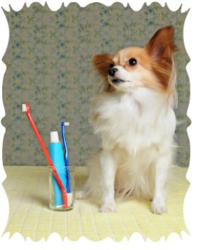 canine teeth cleaning