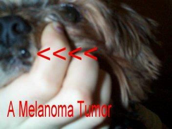 dog illnesses