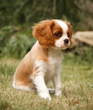 best dog breed for me