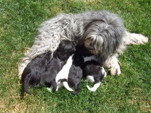 dog breed information center