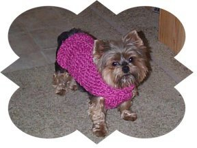 CHIHUAHUA SWEATER CROCHET PATTERN | Crochet Patterns