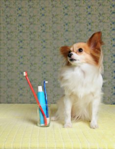 advice care dog health