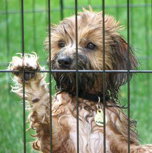 places to adopt a puppy abandoned dogs puppy adoptions