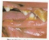canine bad breath
