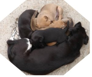 Pregnancy cycle, dogs giving birth