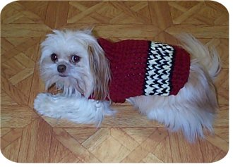 Dog Sweater Herrschners Magazine Crochet Patterns December 1991