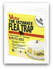 natural flea treatment