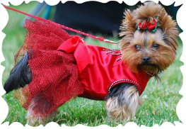 Knit Dog Sweater Patterns in Dog Clothing & Costumes - Lowest