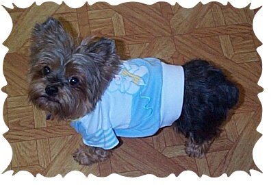 dog-clothes 1
