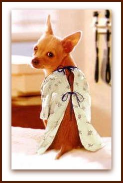 dog health insurance pet