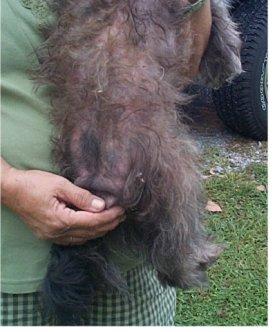 dog skin disorders