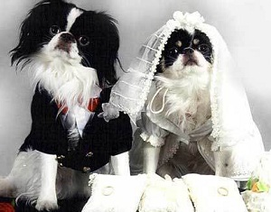 dog wedding clothes