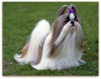 small breeds dogs