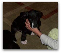 nylon dog muzzles large