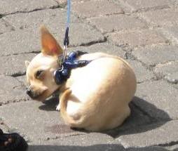 clicker dog training