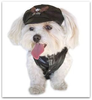 dog santa hats