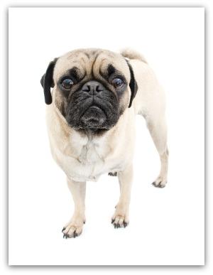 common dog health problems senior