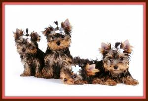 smallest dog bree