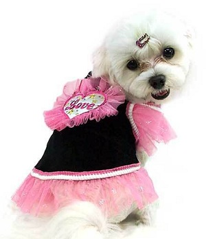 Beautiful Chic Dog Clothing Dog Outfits That Are Uniquely