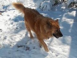 Roo a lucky dog rescue