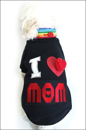 boy dog clothes