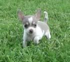 picture of small dog breed