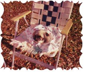 canine camper day tripper