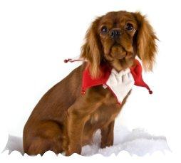 Christmas dog collars 3