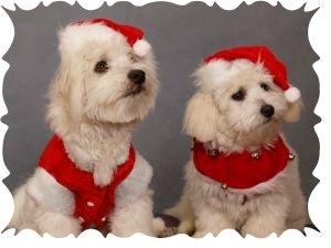 Christmas dog collars 2