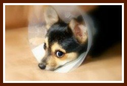 dog health problems symptoms