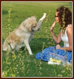 dog training commands training