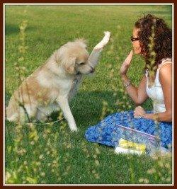 dog training commands training