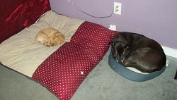 Confused over their luxury pet beds