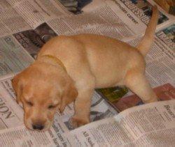 dog urine removal