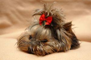 Must see Hair Bows Bow Adorable Dog - xhow-to-make-hair-bows-3  Pictures_877673  .jpg