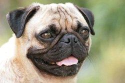 dog health care information