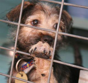 puppy rescue adoption