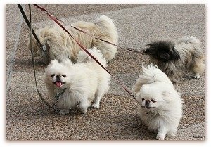 list of small dogs