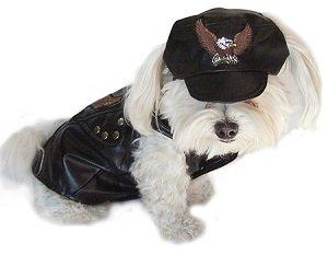 stylish-dog-clothes